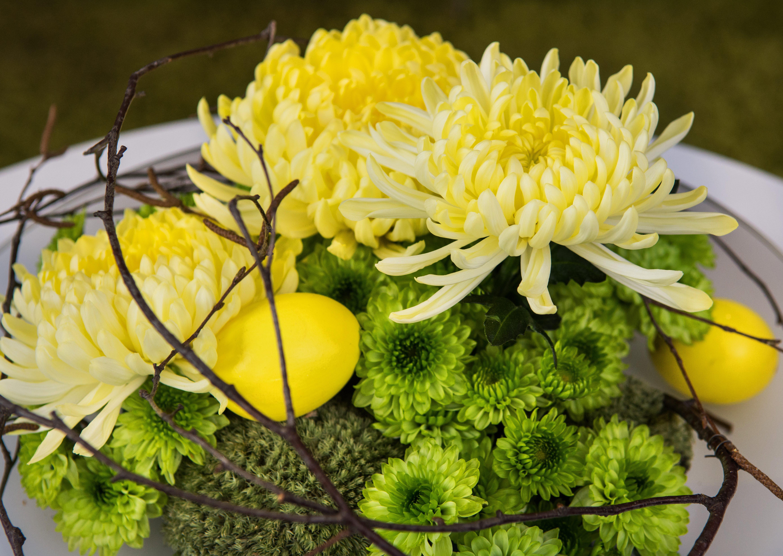 chryzantema wiosna Wielkanoc