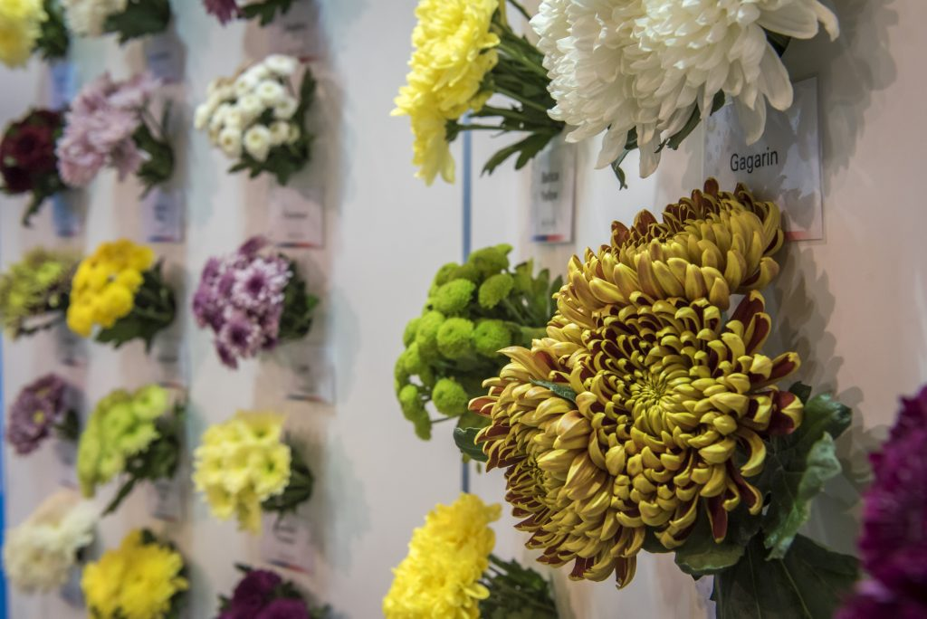 Flower Expo Poland 2017