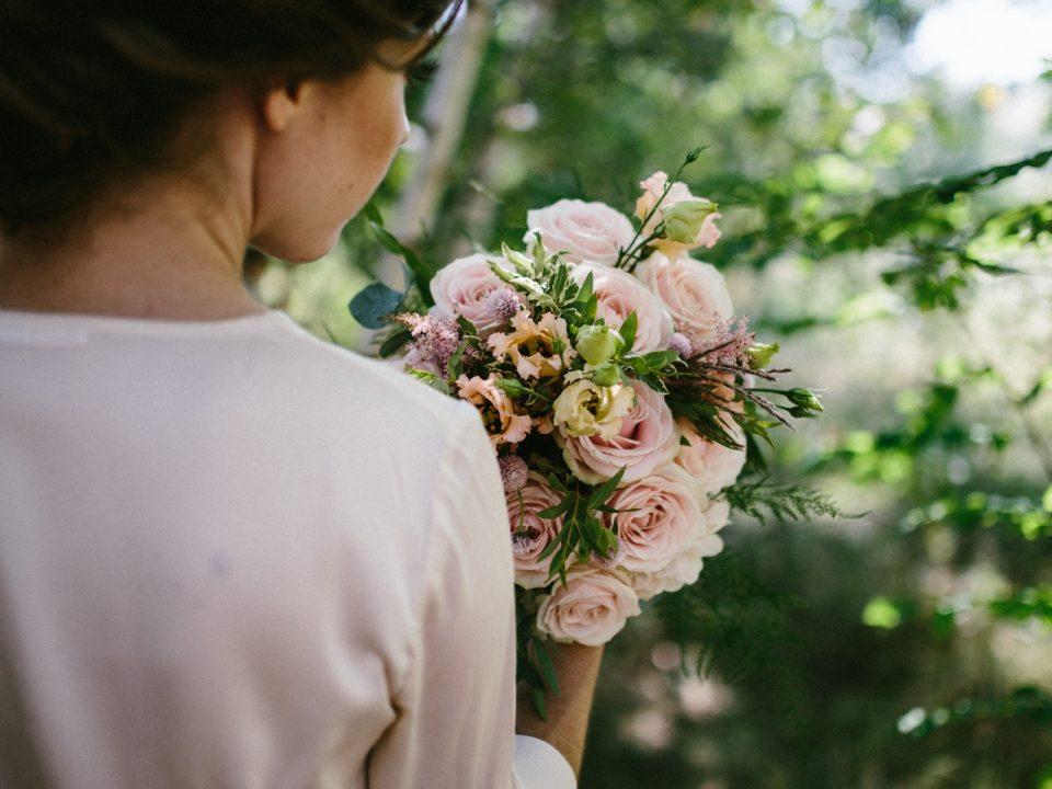 Róża Avalanche+®