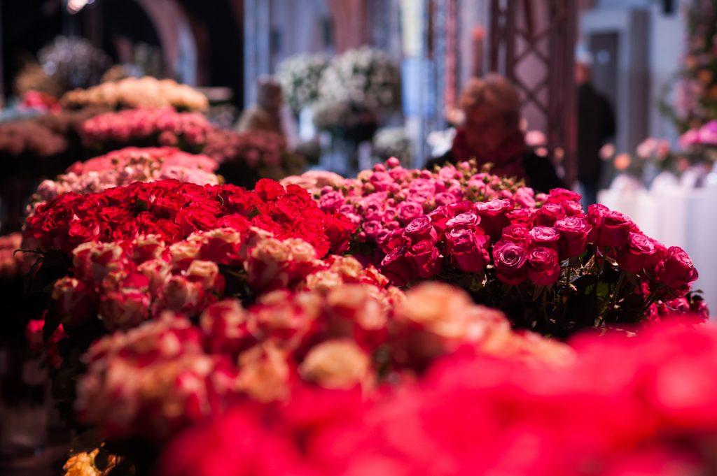 Królewska-Wystawa-Róż-fot.-Olga-Borowska-17-1024x681
