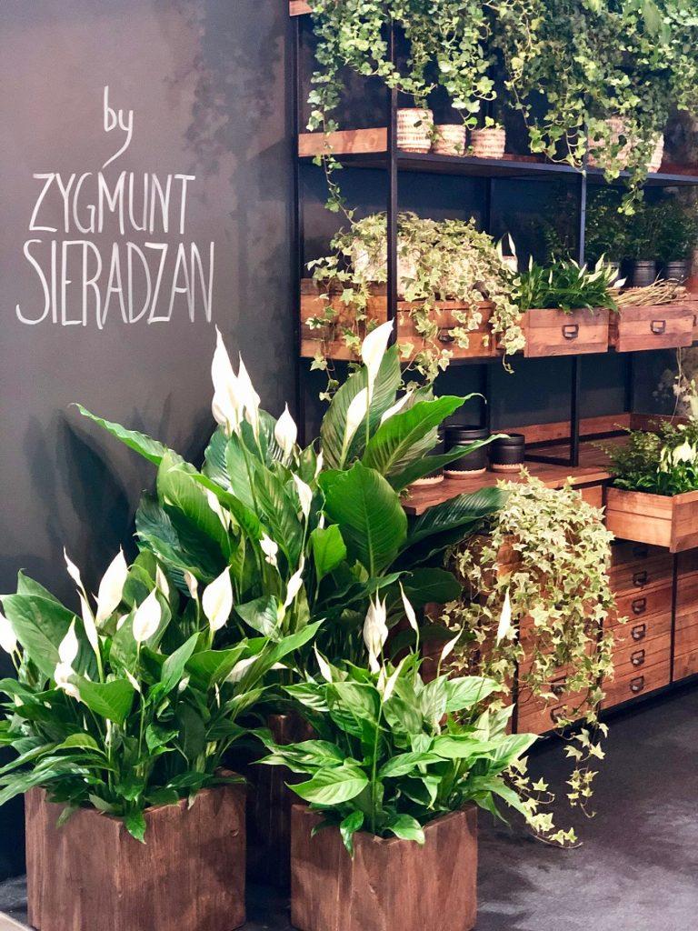Flower-Expo-Poland-2019-showroom-UrbanJungle-phot.-Dawid-Krążyński-768x1024