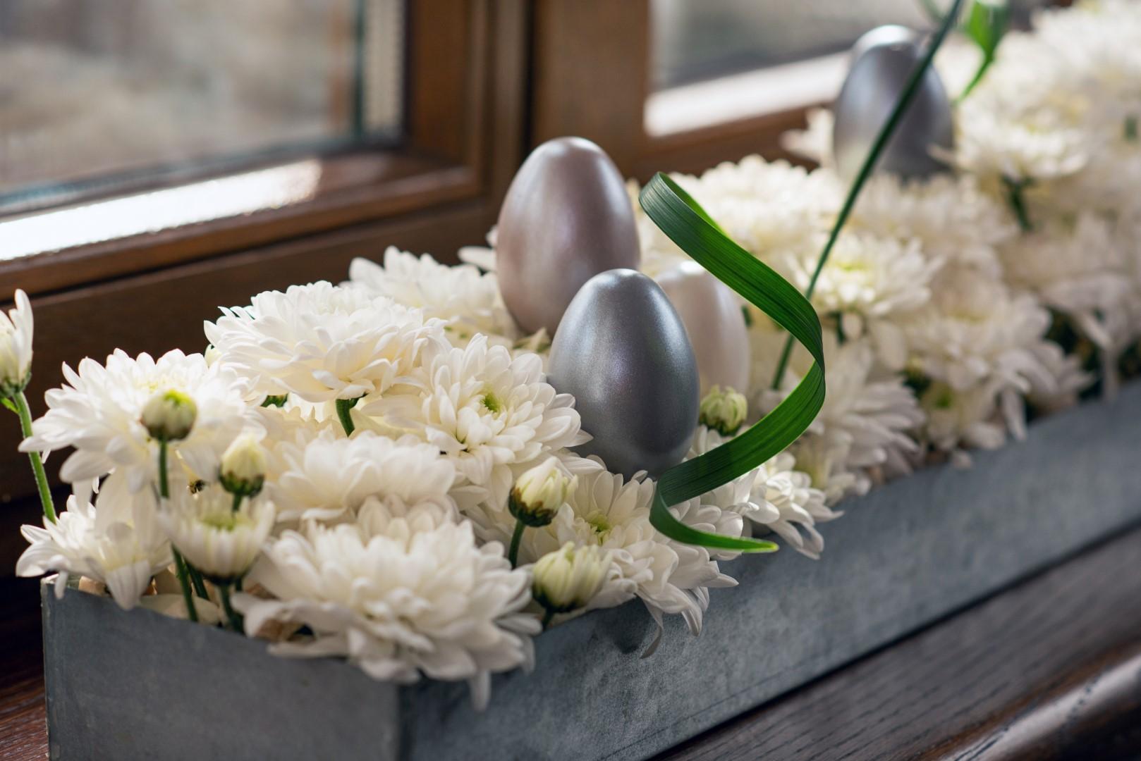 Pina Colada chrysanthemum chryzantema Wielkanoc wiosna